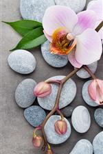 Preview iPhone wallpaper Pink phalaenopsis, petals, flowers, stones, green leaves