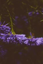 Flores roxas, gotas de água, nebulosa