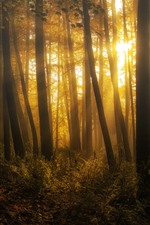 Preview iPhone wallpaper Scotland, forest, trees, sun rays, morning