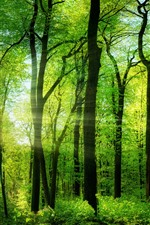 Preview iPhone wallpaper Summer, trees, green, sun rays, morning