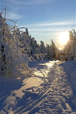 Preview iPhone wallpaper Thick snow, trees, winter, sunrise, morning, shadow