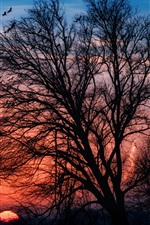Preview iPhone wallpaper Trees, birds, silhouette, sunset