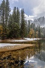 Árvores, neve, riacho, montanhas, natureza paisagem, inverno