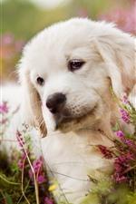 iPhone обои Белый щенок, розовые цветы, туманные