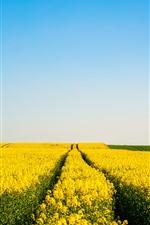 iPhone обои Желтые цветы поля, голубое небо, весна