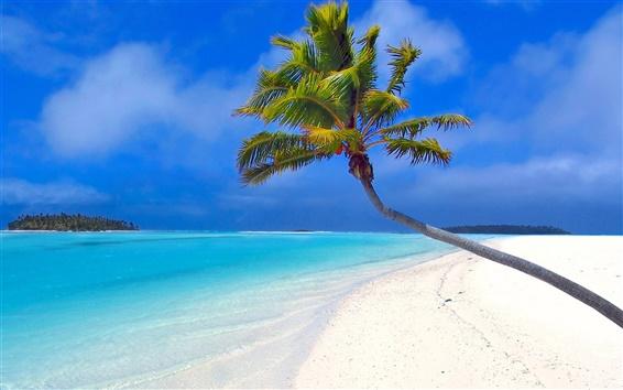 壁紙 椰子のビーチ