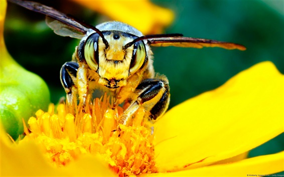 Wallpaper Bee and Flower