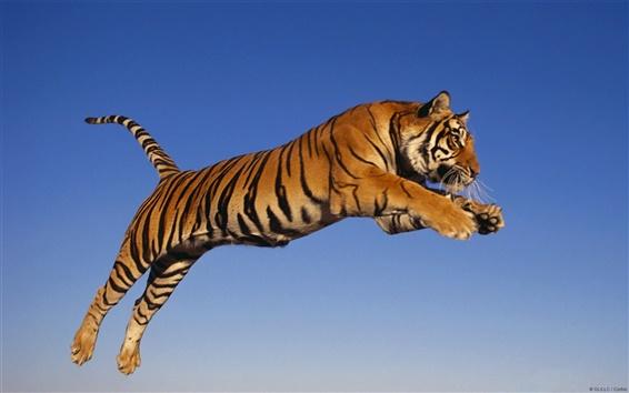 Wallpaper Bengal tiger sky