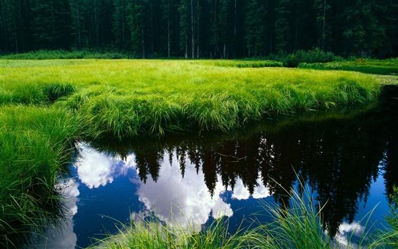 Обои Чистая вода окруженный зеленой траве