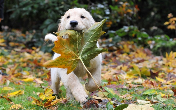 桌布 小狗與樹葉