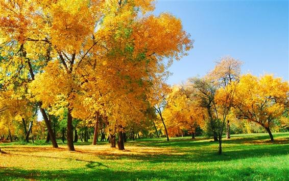桌布 金色的秋天