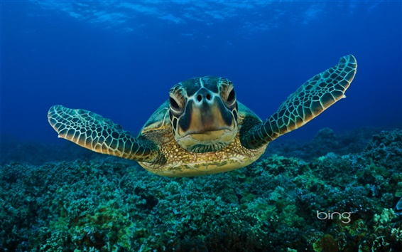 Wallpaper Green Sea Turtle