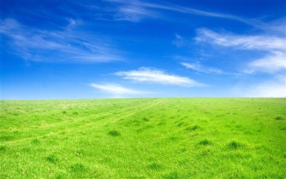壁紙 緑の芝生、青空