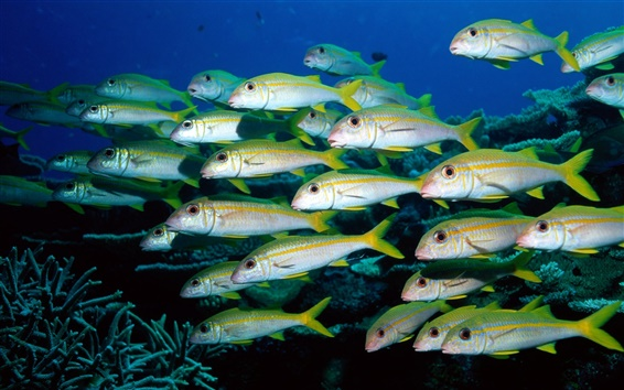 Wallpaper Groups of fish underwater world