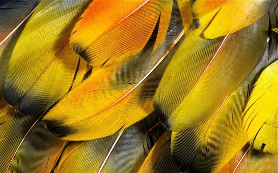 Wallpaper Orange feather