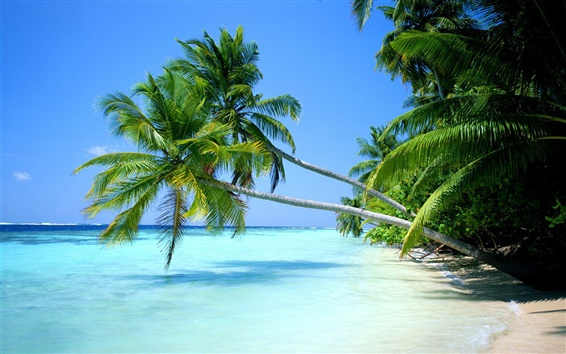 Wallpaper Palm tree close contact with the sea