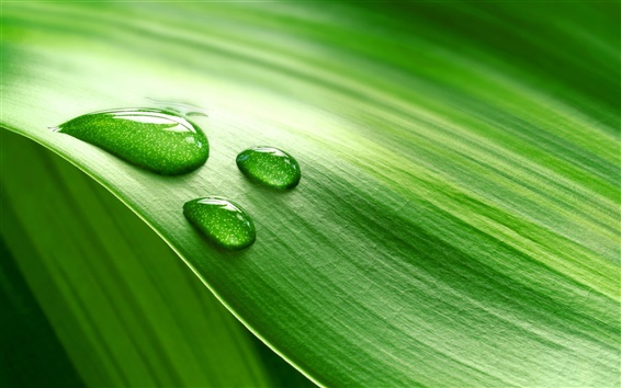 Wallpaper Piece of fresh green leaves with water drops