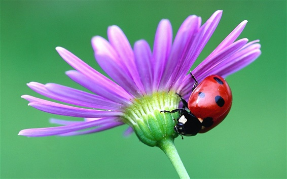 Wallpaper Red Beetle and flower