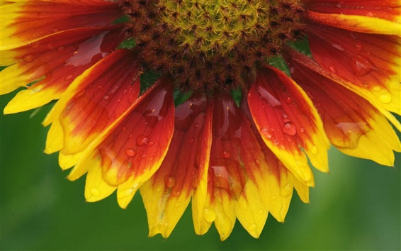 Wallpaper Sunflower flower macro close up