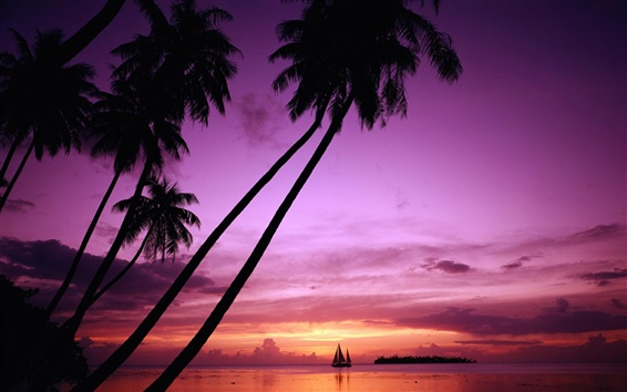 Wallpaper Sunset palm tree silhouette