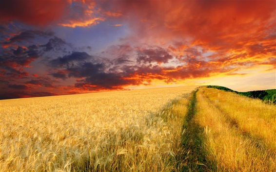 Wallpaper The endless wheat fields at dusk