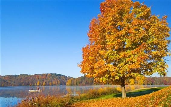 Обои один красный лист дерева осенью