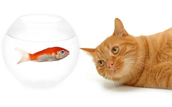 壁紙 猫と魚の視覚上