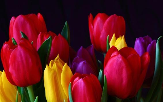 Papéis de Parede Tulip