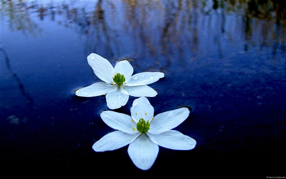 Wallpaper Water flower