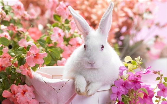 Wallpaper White rabbit and flowers