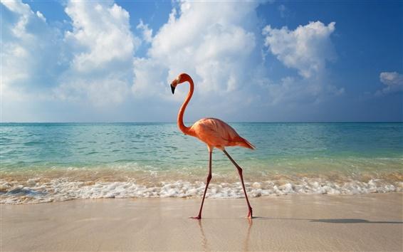 Обои Flamingo Beach