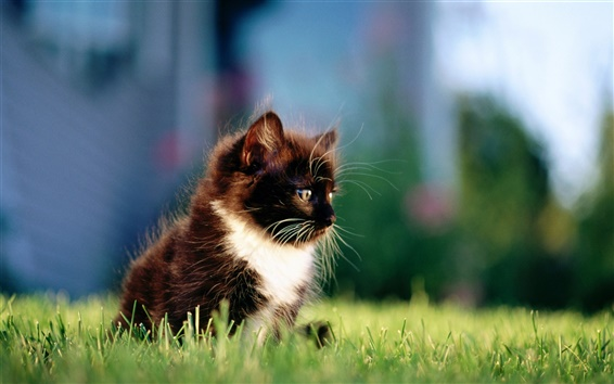 Wallpaper Black cat on the grass