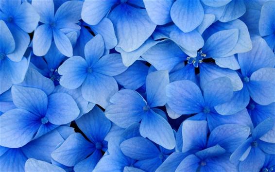 배경 화면 블루 꽃