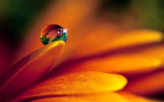 Papéis de Parede Close-up de gotas de flores e água