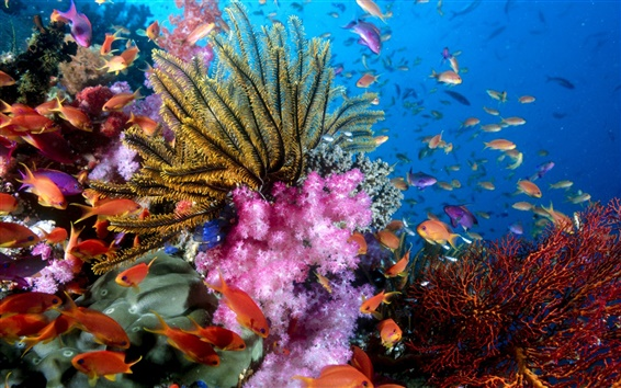 배경 화면 다채로운 바다 물고기