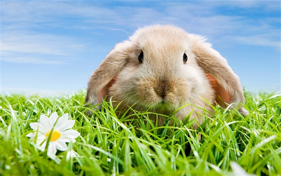 Wallpaper Cute rabbit