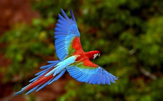 Wallpaper Flying parrot