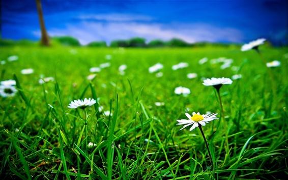 Papéis de Parede Grama verde e flores brancas