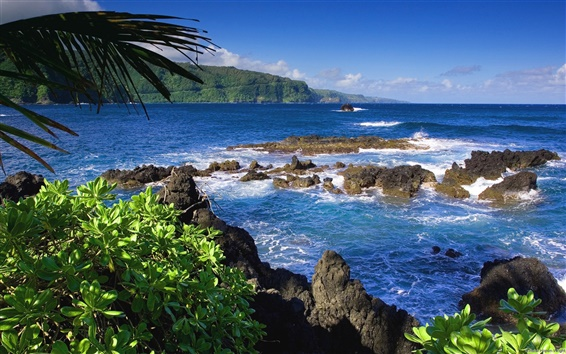 Wallpaper Maui in United States