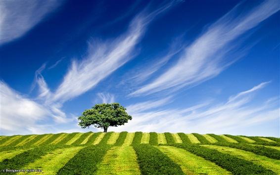 Papéis de Parede Árvore até o morro