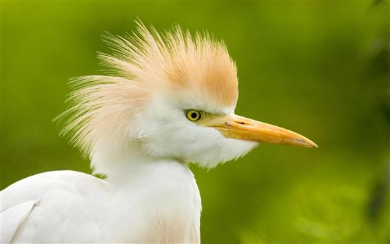 Wallpaper White little bird