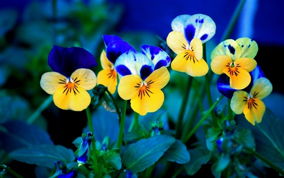 Wallpaper Yellow and blue flowers