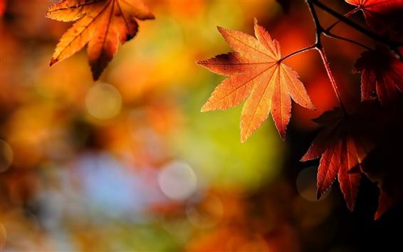 Fond d'écran Automne feuilles nature