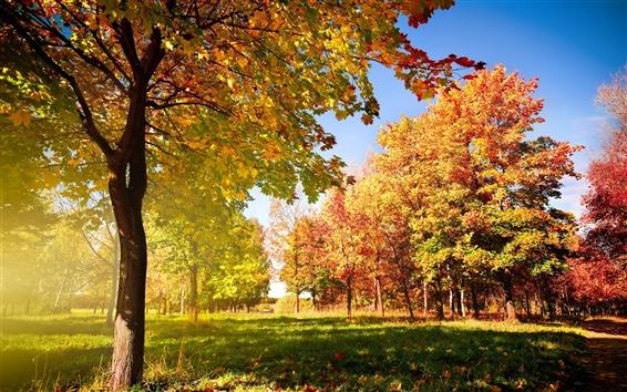 Обои Осенние деревья и листья
