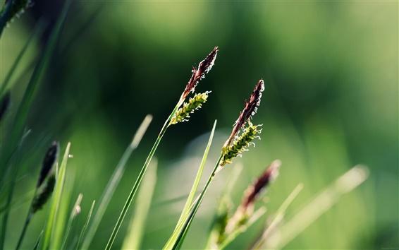 Fond d'écran Gros plan sur l'herbe