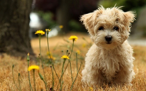 Wallpaper Cute dog