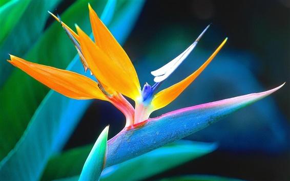 Fondos de pantalla flor macro