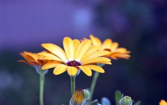 Обои Цветочные лепестки фотографии красота крупным планом