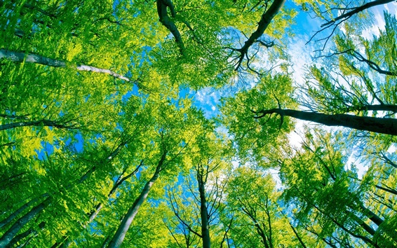 Wallpaper Forest trees green paradise