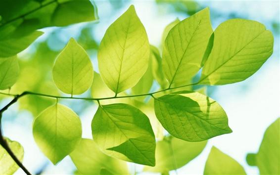 Papéis de Parede Folhas verdes da primavera